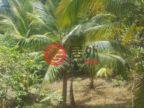 牙买加的商业地产,编号36947516
