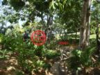 洪都拉斯海湾群岛Roatán的土地,Beachfront Lot#6 Lawson Rock,编号48156433