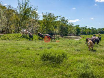 居外网在售美国菲利斯USD 2,630,000总占地35平方米的土地